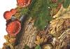 Mosaicos_naturalistic_05